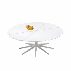 PETAL COFFEE - Coffee Table - Designer Furniture -  Silvera Uk